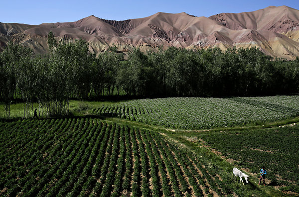 Mauricio Lima for The New York Times A boy took his donkey along the edge of a potato field in central Bamian Province, Afghanistan, on a road that leads to the nation's largest iron ore mine.