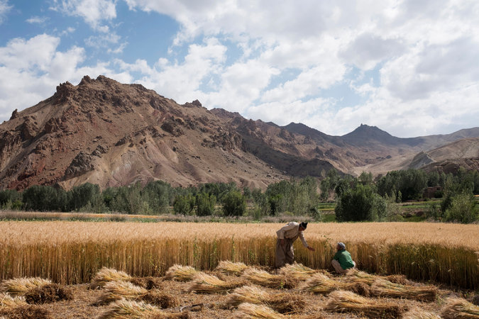 Farmers with their wheat crop last month in the Shibar Valley.